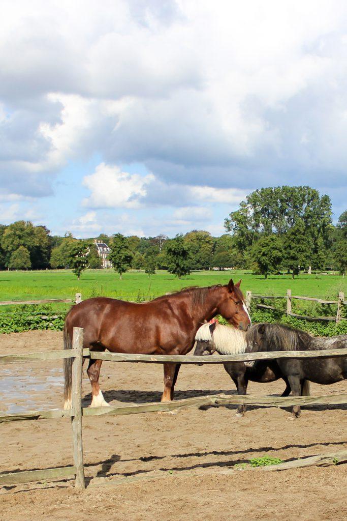 Zorgboerderij in Bloemendaal