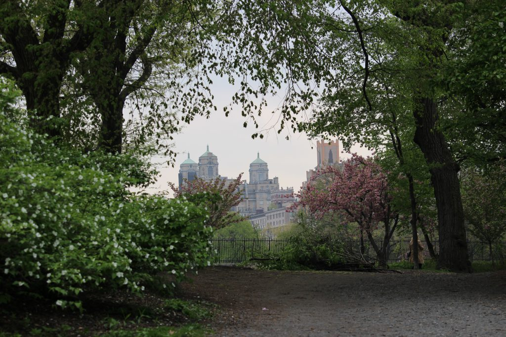 Another amazing view in Central Park