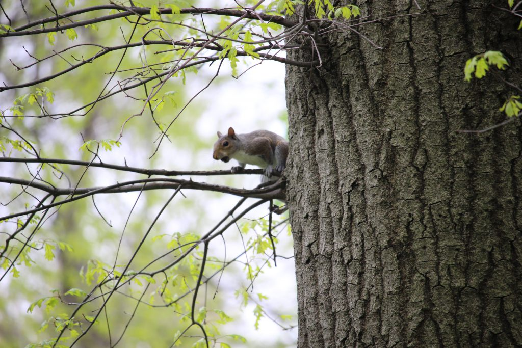 Another squirrel