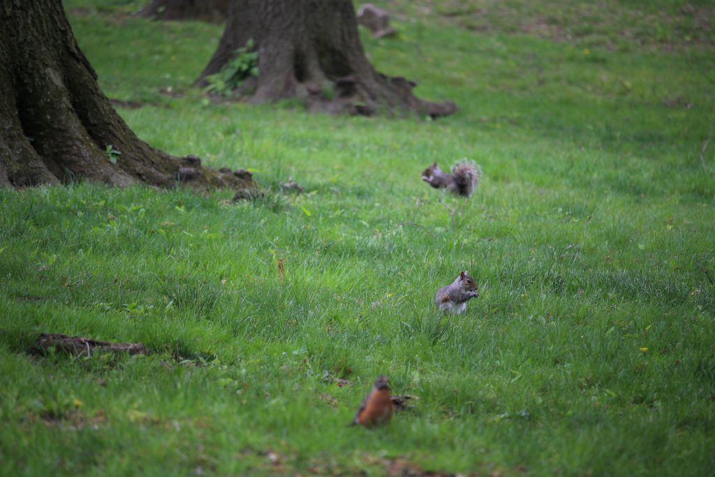 More squirrels and birds