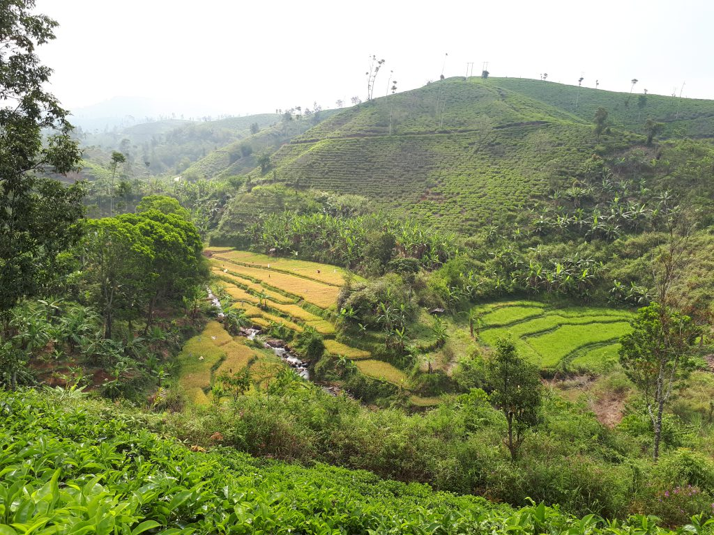 The moutains of Cianjur