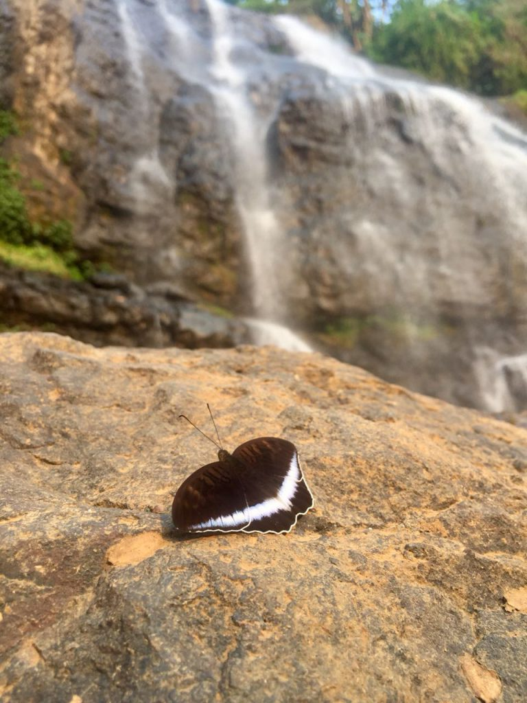 Butterfly at the waterfall